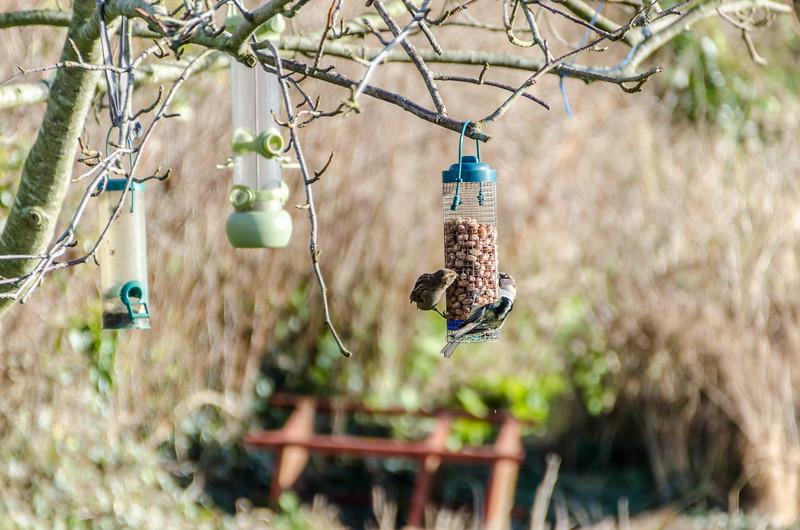 Birds 180118-59.jpg