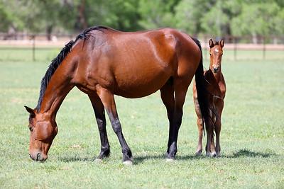 Rancho Corazon Spring Foals 2016