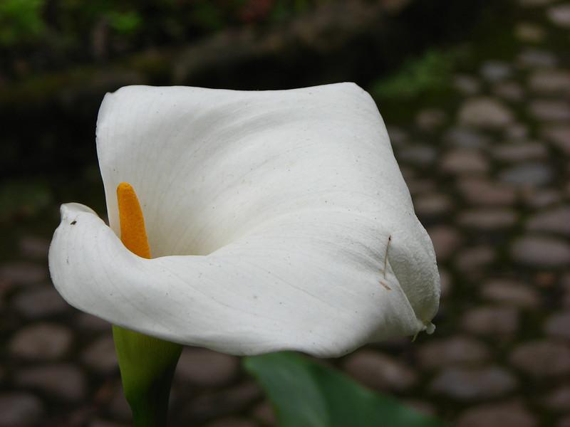 Colombia 074.JPG
