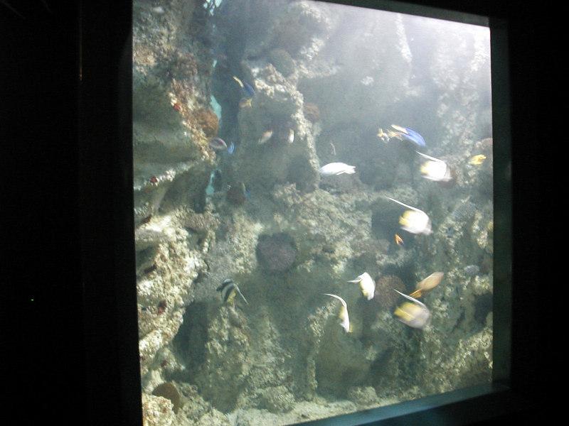 57.  Sydney Aquarium.JPG