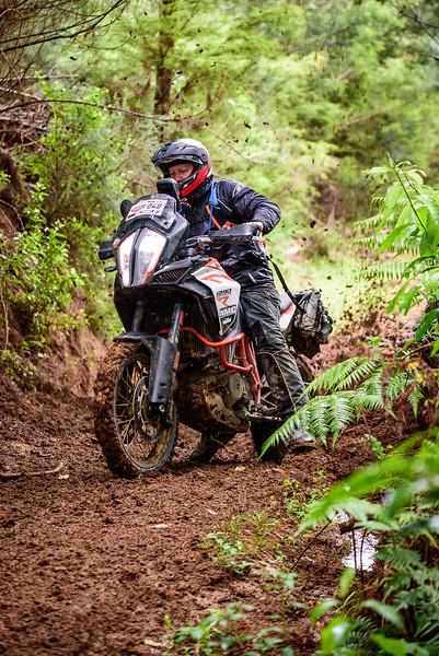 2018 KTM New Zealand Adventure Rallye - Northland (766).jpg