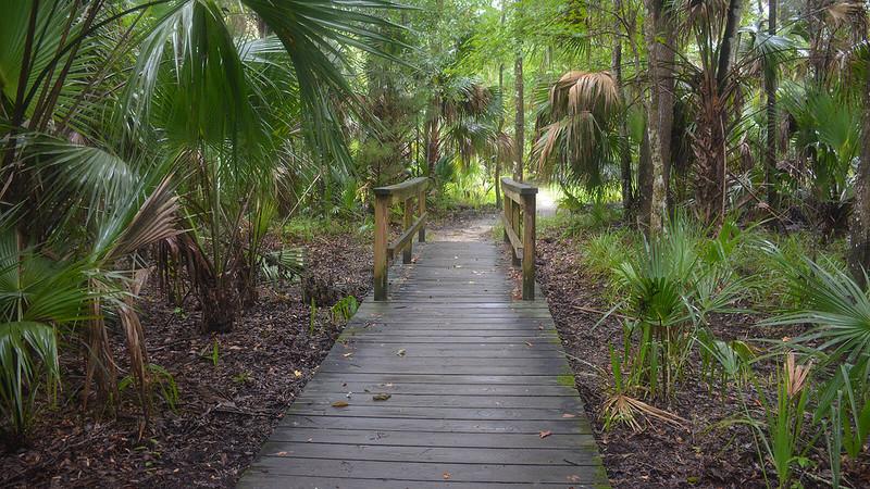 Boardwalk and bridge among palms