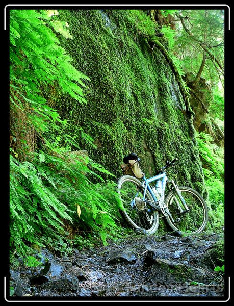 The water flowed down this wall of moss and across the trail.