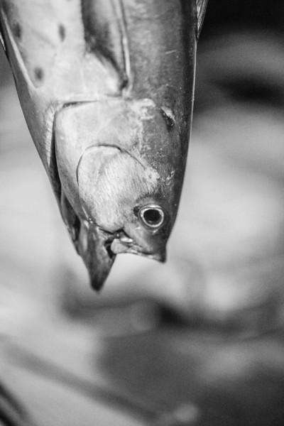 marthasvineyardderbyflyfishing.bcarmichael2018 (33 of 69).jpg