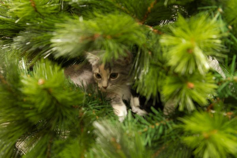 Christmas Day 2012-7085.jpg