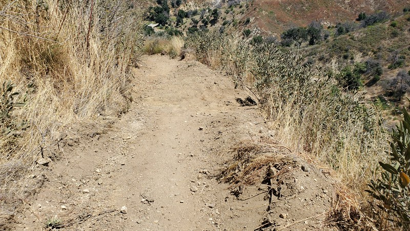 20190810061-Los Pinetos trailwork.jpg