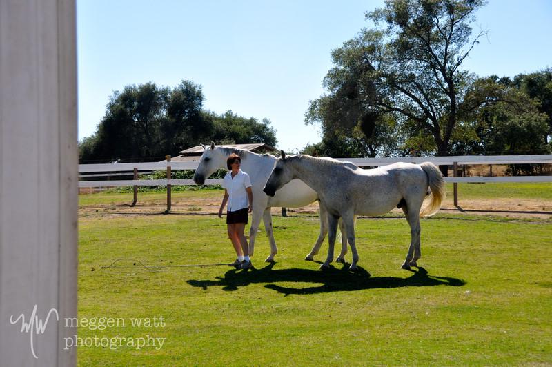 EB&Horses-148.jpg
