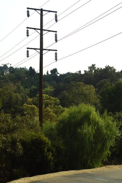 DebsPark045-RoadTreesAndTelephoneWires-2006-10-06.jpg