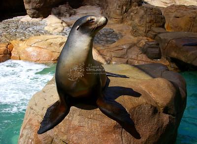Seaworld CA 2008