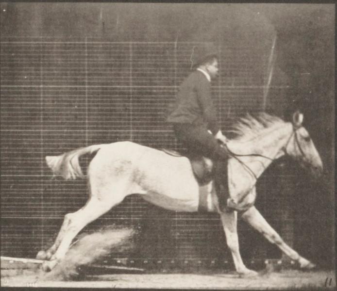 Horse Pandora jumping hurdle, saddled with a rider, knocking over the hurdle and landing