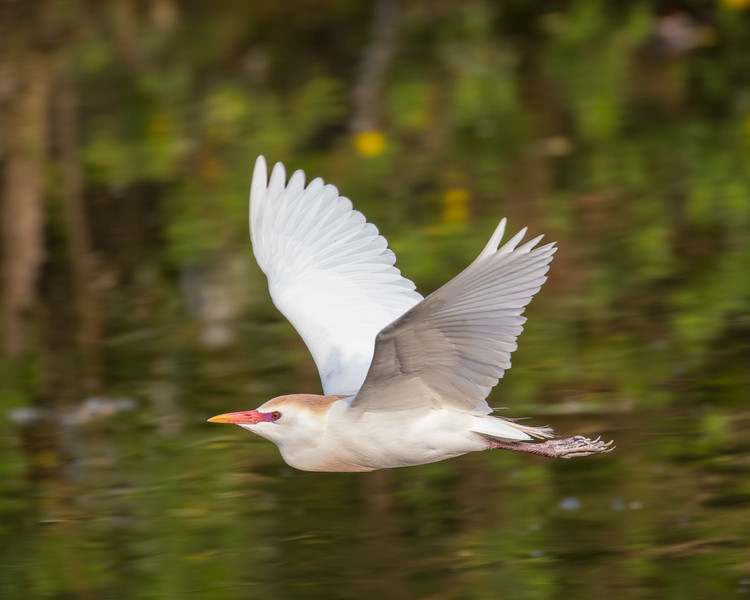 Bird Photography Gallery