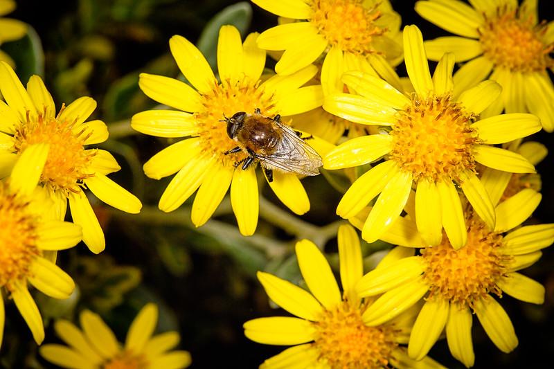 Bee-petal