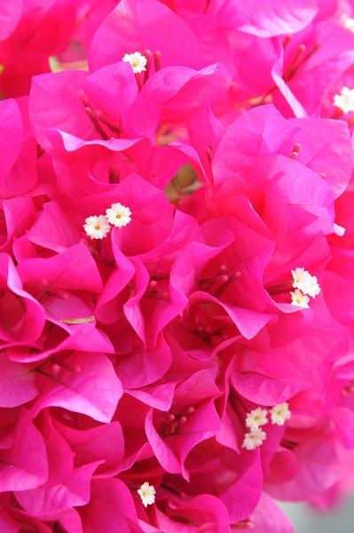 20121018_Nature_129.jpg