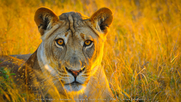 2008 Southern Africa