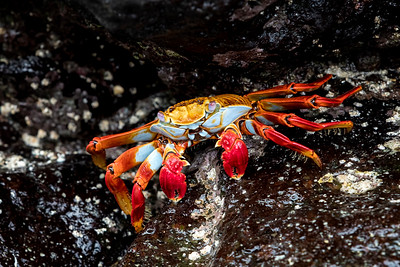 Insects and Crustaceans