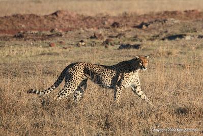 Tanzania- Ngorongoro Crater