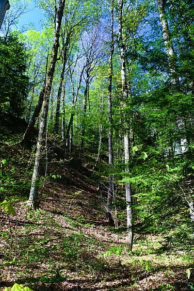 Hogback Ridge.JPG
