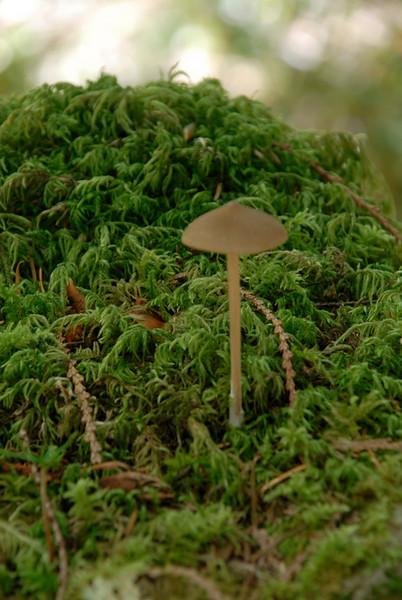 _DSC0001shroom.jpg