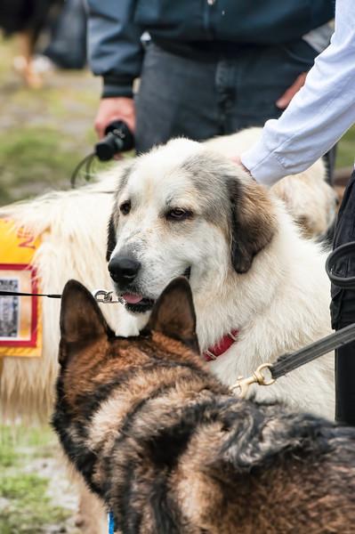 2012 Bark in the Park-251.jpg
