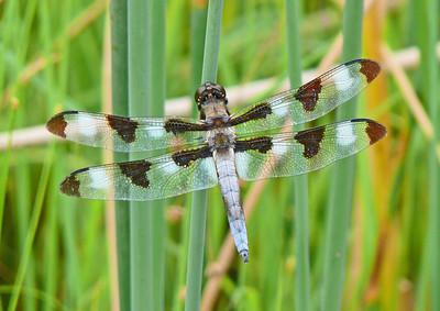 LWC Dragonfly Trip 7-24-11