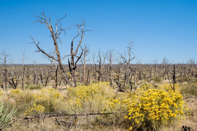 Life Regenerating after a forest fire in Mesa Verde National Park