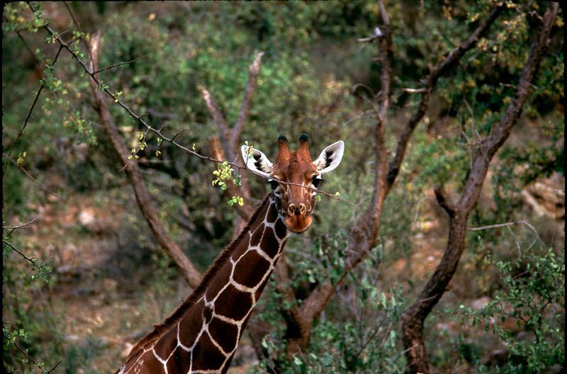 Kenya1_069.jpg