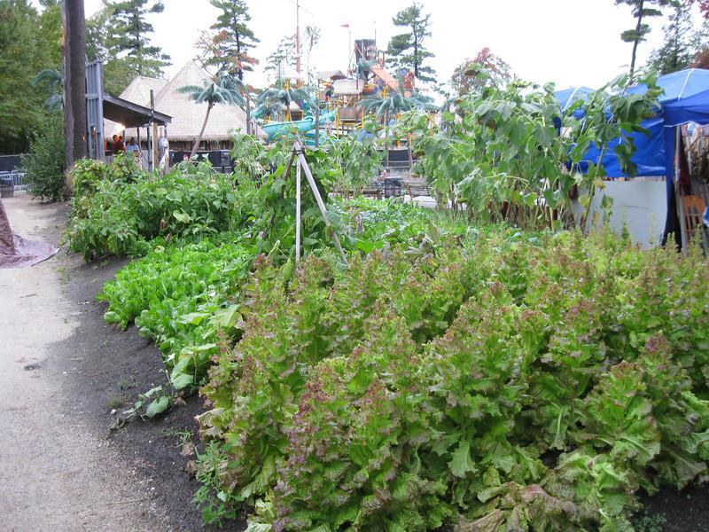 A garden outside Terror in the Corn.