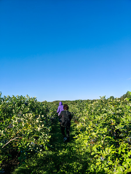 Blueberry Acres-2.jpg