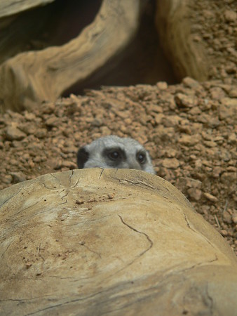 2008 Indianapolis Zoo