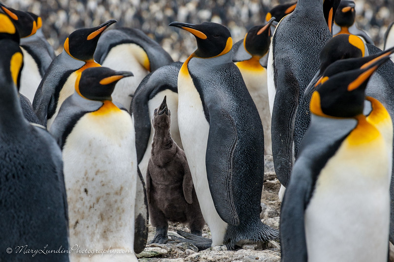 Antarctic-167
