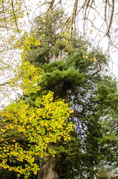 20141015_Redwoods_0076.jpg