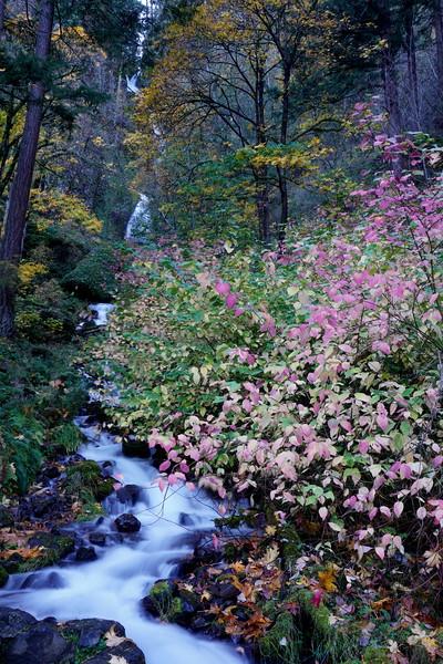 Gorge Falls 28.JPG