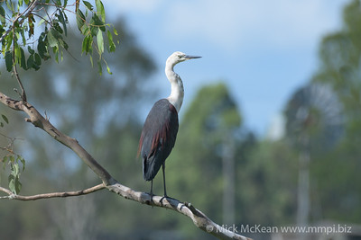20180226-MMPI0046 - Bird Outing - Purga Region