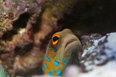 Marine Aquarium 2