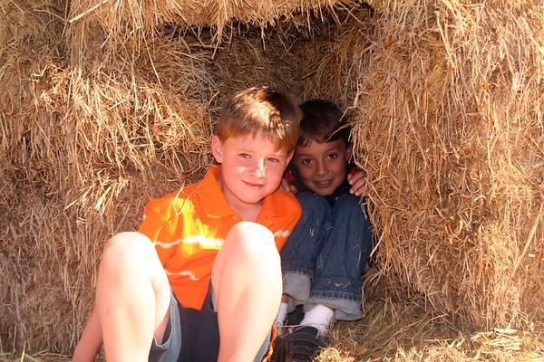 Pumpkin Farm 06