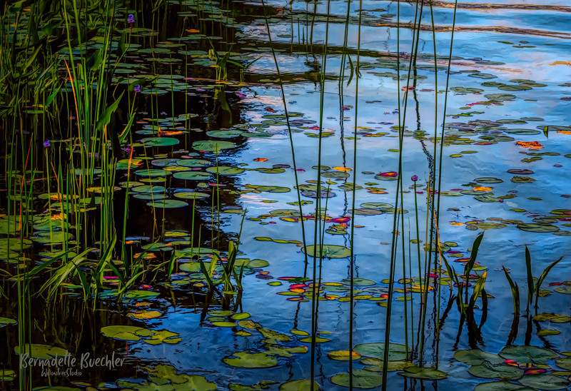 LILY PAD AND REEDS.jpg