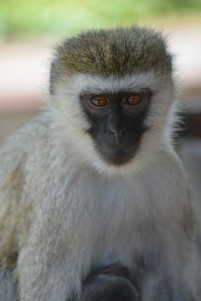 East Africa Safari 231.jpg