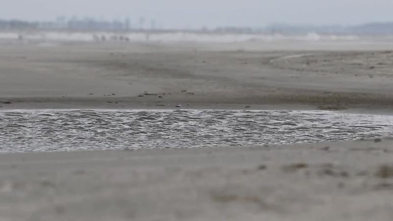 Tidal pool and pelicans loop.mp4