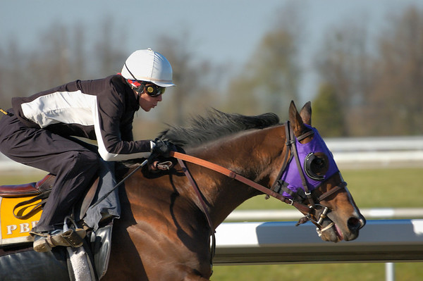 Stock image of the closeup of the head of a thoroughbred horse and exercise jockey during an early morning workout at the Keeneland track in Lexington Kentucky USA