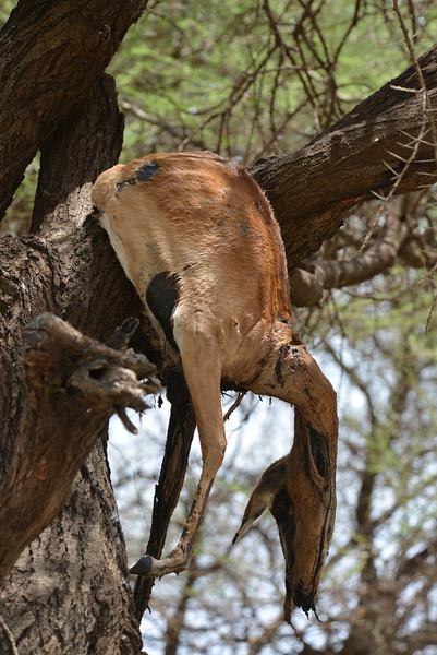 East Africa Safari 464.jpg