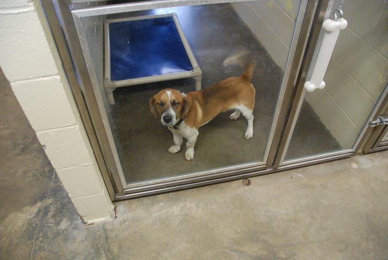 Kentucky Humane Society 2010 015.jpg