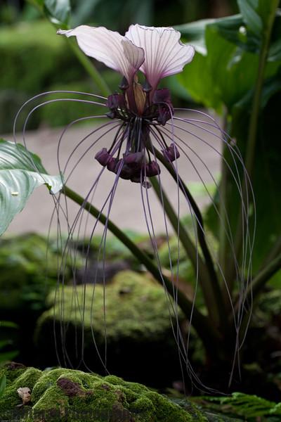 Singapore gardens-6233.jpg