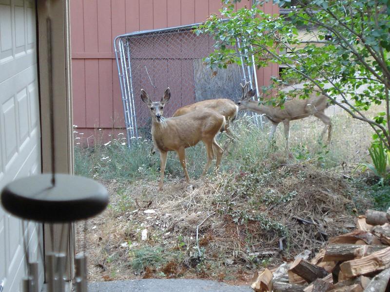 Garden Visitors 08/26/2016
