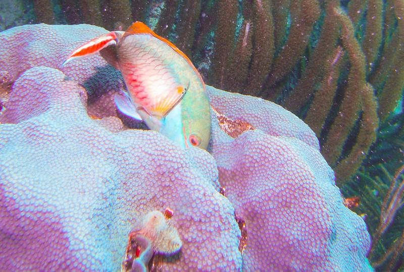 Dive Puerto Rico = Feb., 2013-Puerto Rico Dive Feb 2013-77-009.jpg