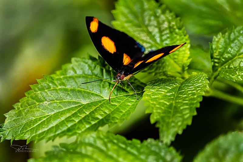 JM8_8915 black orange S.jpg