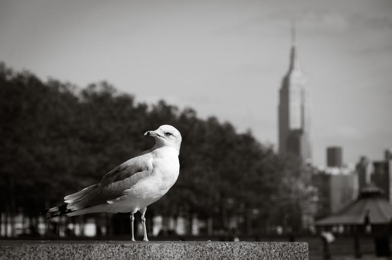 City Bird By Alex Kaplan www.AlexKaplanPhoto.com