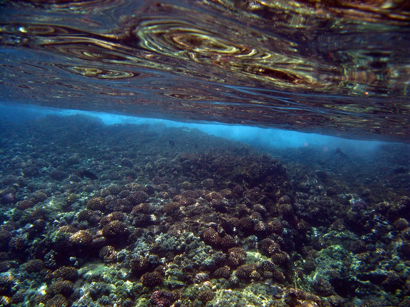 An underwater view from the Molokini Crater in Hawaii.