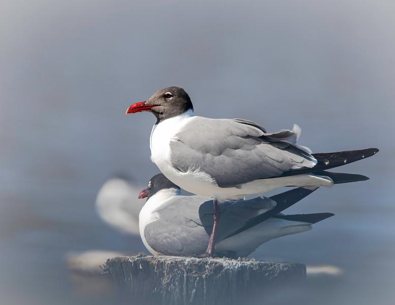Two Sea Gulls_664A9961.jpg