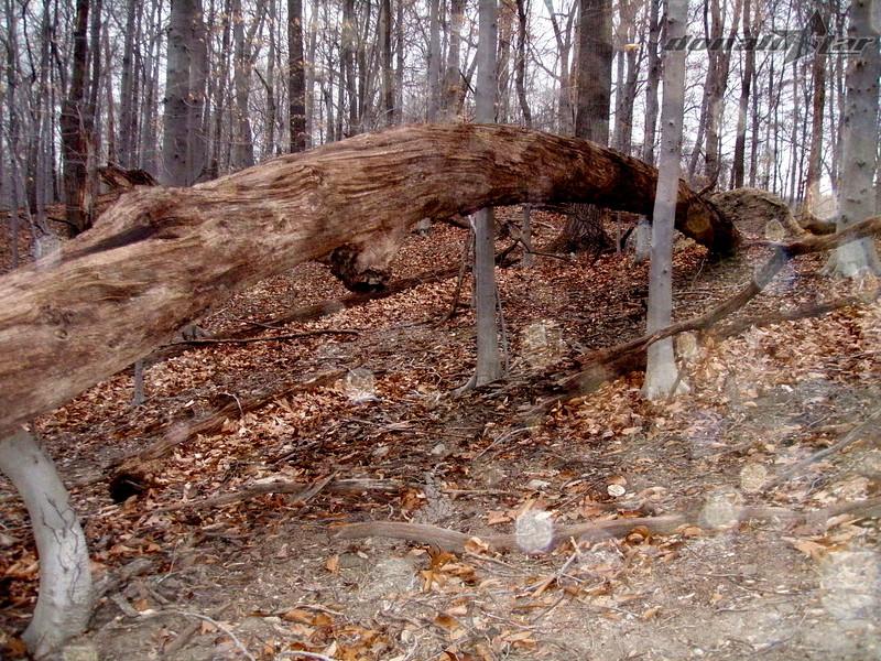 John Posner rode this tree