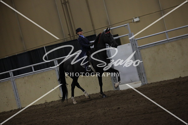 ASB 3-Gaited Show Pleasure Stake